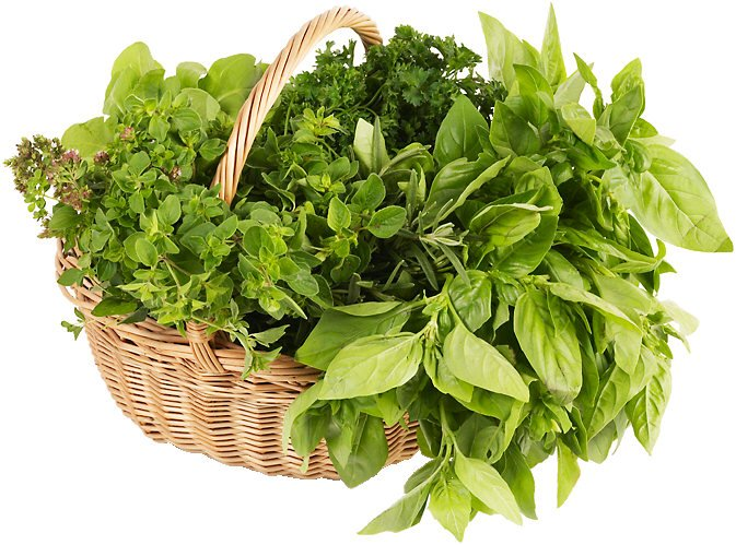 basket of basil and other herbs